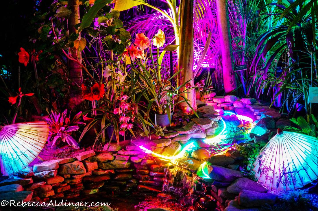Image Gallery Night Botanical Gardens